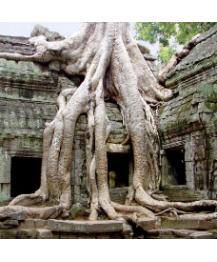 5D4N Siem Reap (Angkor Wat) / Phnom Penh