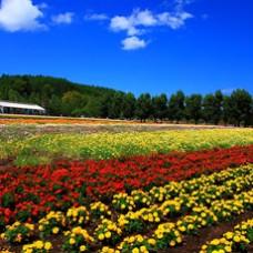 6D4N Best Season in Hokkaido