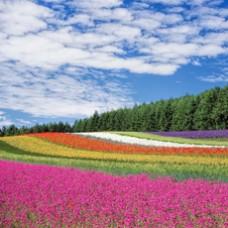 6D4N Japan Hokkaido (Otaru / Asahikama / Sounkyo / Furano)