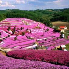 6D4N Japan Hokkaido (Noberibetsu / Otaru / Sapporo / Furano)