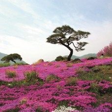 6D5N Romantic Jeju Island + 01 Day Free & Easy.