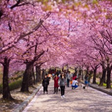 6D4N Seoul / Nami Island / Mount. Sorak + Jeju Island + Ski Fun + Hot Spring Water