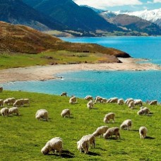 10D7N New Zealand ~ South & North Island ( 2 Ways Domestic Flight)