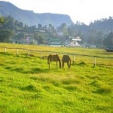 Sri Lanka Paradise (Colombo Sigiriya  Kandy Nuwara Eliya Kitulgala Colombo ) 6D5N