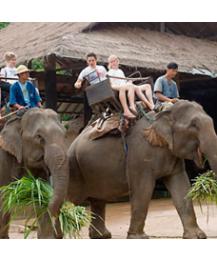 5D4N Chiangmai / Chiangrai (overnight) + Elephant Camp